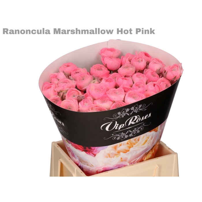<h4>RAN OV MARSHMALLOW HOT PINK</h4>