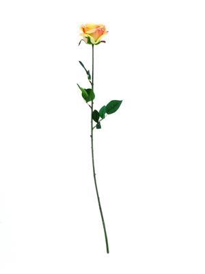<h4>Af Rose Camelot 74cm Peach</h4>