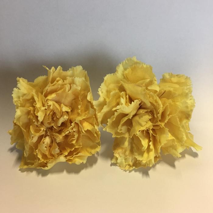 <h4>Anjer geel 4,5-5cm</h4>