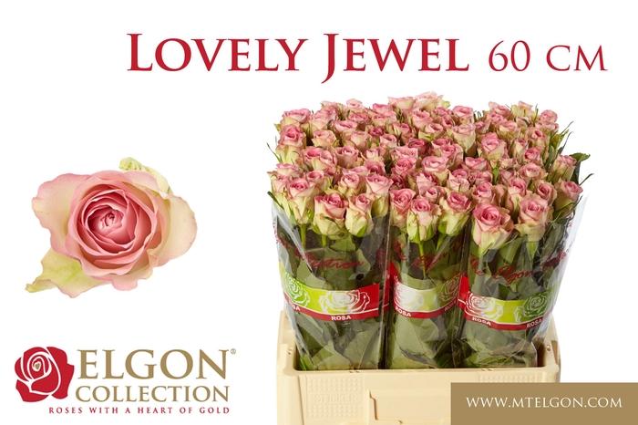 <h4>R GR LOVELY JEWEL</h4>