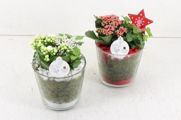 <h4>arr. PL - Glas pot zwaar - rood/wit</h4>
