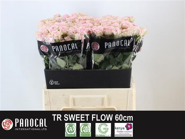 <h4>R TR SWEET FLOW</h4>