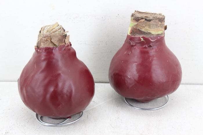 <h4>Bl bol Hipp Wax - Bordeaux</h4>