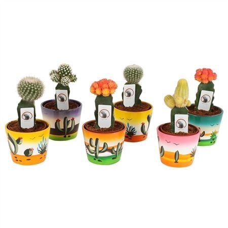 <h4>Cactus A4110000 Gymno Gemengd Keramiek Mexico</h4>