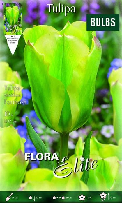 <h4>Z Tulipa Viridiflora Formosa</h4>