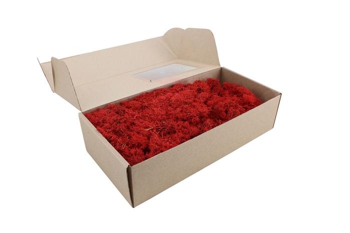<h4>Reindeer Moss Red X 12</h4>