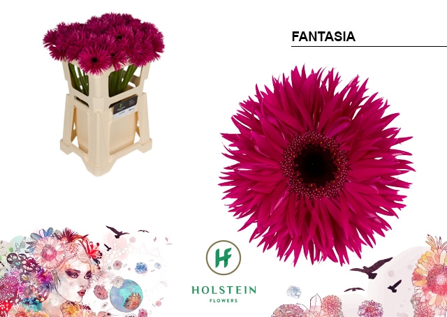 <h4>GE GR GERSP hoes Fantasia</h4>