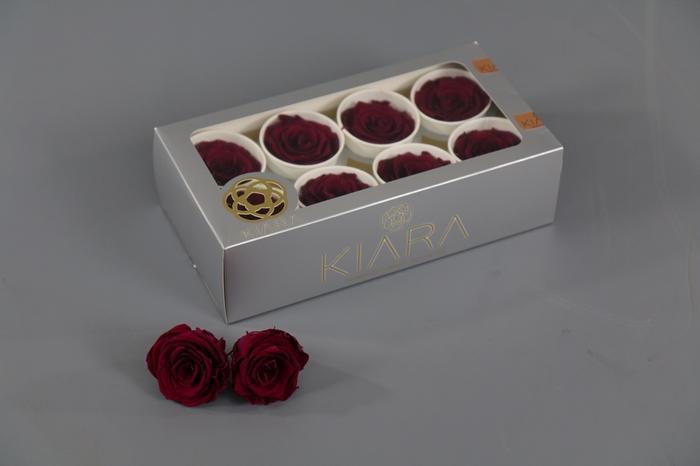 <h4>Rosa Preserved Cherry Rose Rose</h4>