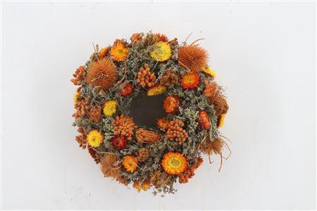 <h4>Wr Sensation Deluxe Orange Natural 25cm</h4>