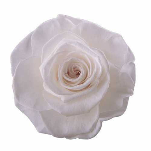 Rose Magna Princess White