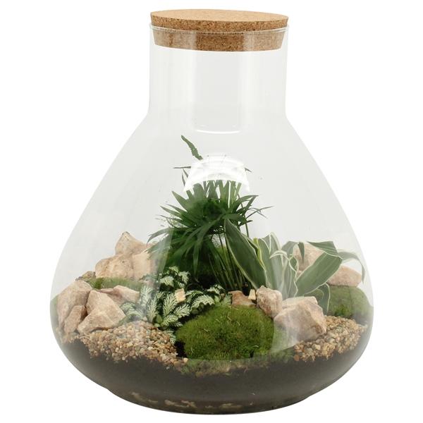 <h4>90077: Terrarium arrangement</h4>