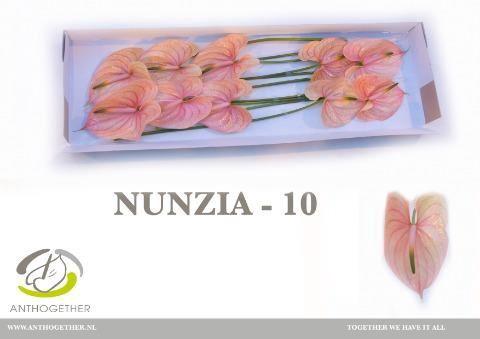 <h4>Anth Nunzia</h4>