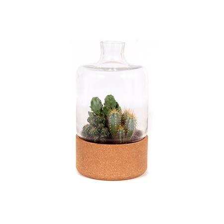 <h4>Beplante Glazen Stolp Met Kurk En 3x Cactus 8,5 Cm</h4>