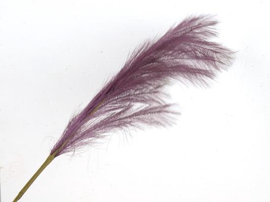 <h4>Af Pampas 100cm Purple</h4>