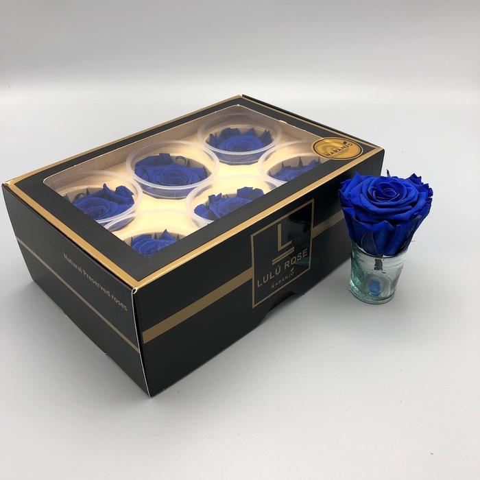 <h4>R PR Lulu (Medium) Blue</h4>