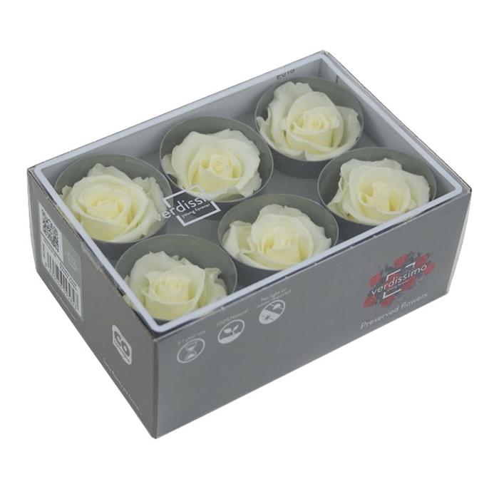 <h4>Standard Rose 6pcs Vanilla Cream</h4>