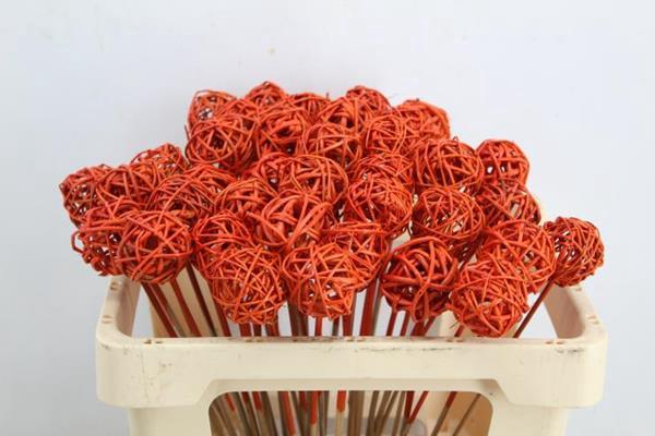 <h4>Droog Grasbal Oranje Znd Glx40</h4>