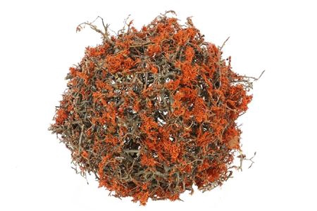<h4>Ball Bonsai Mossed D35.0 Nat/orange</h4>