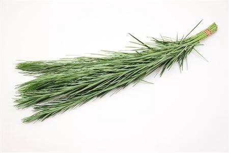 <h4>Emu Grass</h4>
