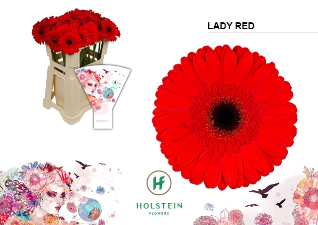 <h4>GE GR hoes Lady Red</h4>