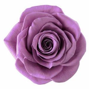 Rose Ava Lilac