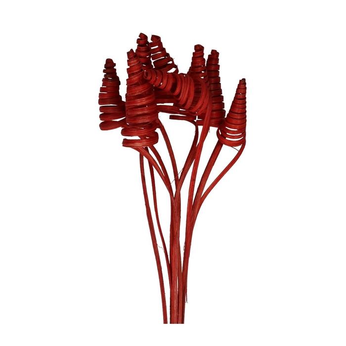 <h4>Bijsteker 50cm Cane Cone</h4>