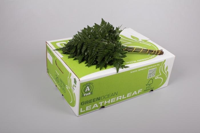 <h4>Ledervaren Junior Green Ocean</h4>