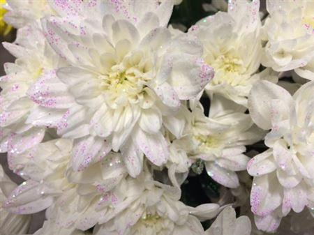 <h4>Chr T Baltica White + Glit</h4>