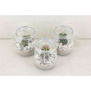 arr. Cactus JS2083 - Glas weckpotje