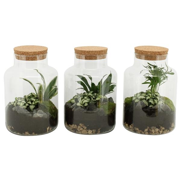 <h4>Terrarium arrangement</h4>