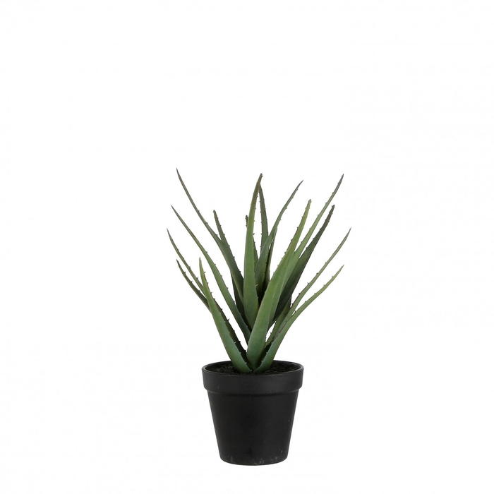 <h4>Silk Aloe Vera in pot 28cm</h4>