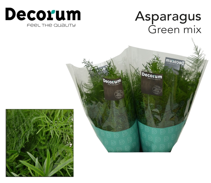 <h4>Asp exclusive green mix</h4>