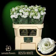 <h4>Lisianthus blanco Holanda</h4>