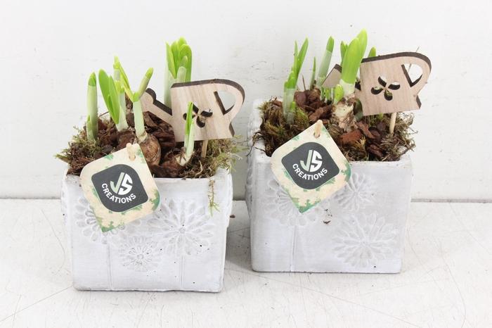 <h4>arr.. Narcis JS - Ker. 4kant bloem</h4>