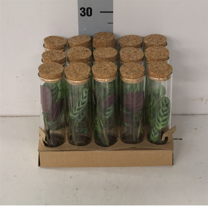 <h4>Kamerplanten Mix In Tube</h4>