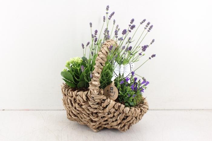 <h4>arr.. Outdoor PL - Hengsl. ovaal lavendel</h4>