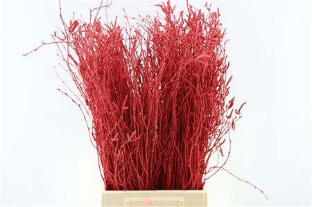<h4>BERK 60CM RED BUNCH</h4>