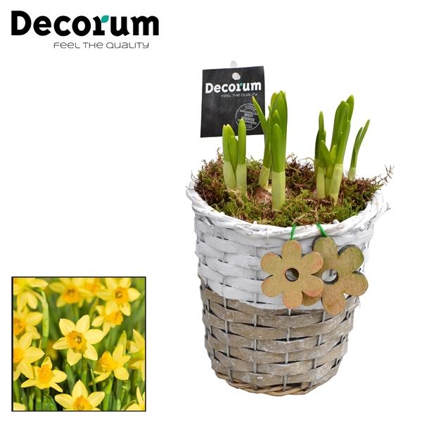 <h4>Narcissus Gevlochten Mand Rond HL15703N</h4>