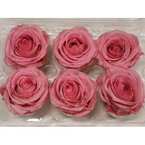 R Prs Pink