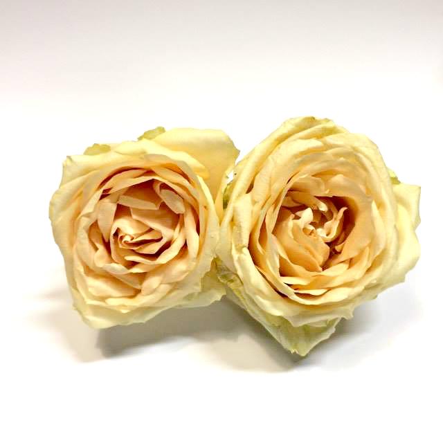 <h4>Peach Avalanche 4,5-5cm</h4>