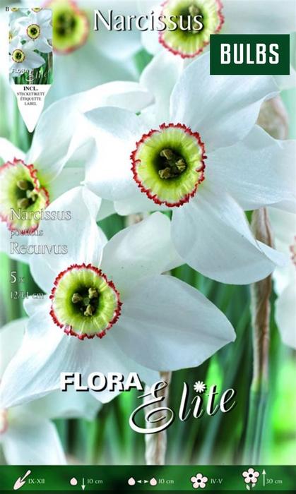 <h4>Z Narcissus Poeticus Recurvus</h4>