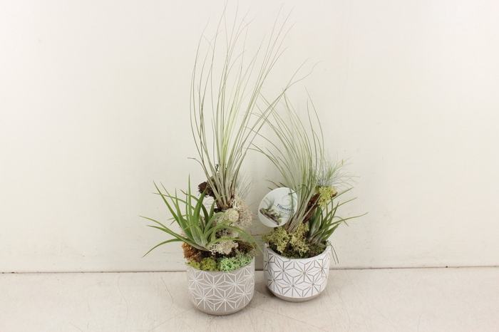 <h4>arr. Tillandsia GB - Ker. pot tak 496/6</h4>