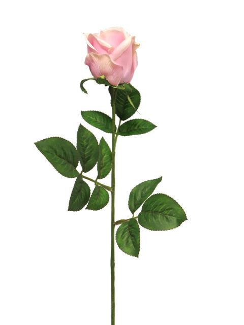 <h4>DF885057200 - Rosa susan bud pink 65cm</h4>