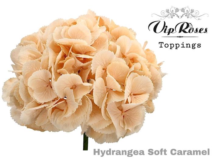 HYDR M SOFT CARAMEL 60 CM