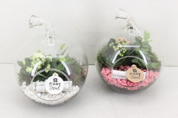 <h4>arr. PL - Glazen appel - roze/wit</h4>