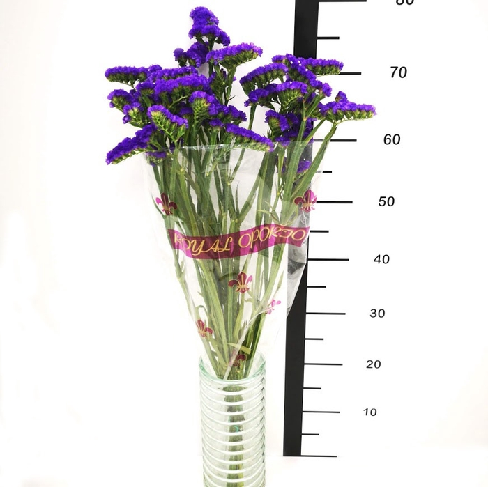 Statice azul (R. OPORTO)