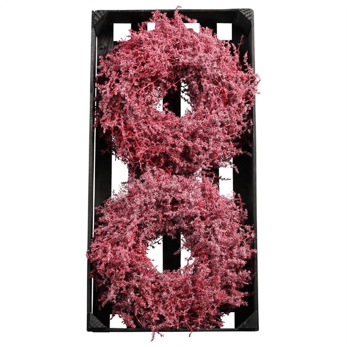<h4>WR ASPARAGUS D25CM RED WAX</h4>