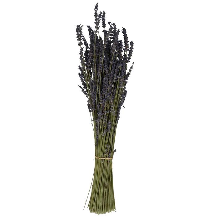 <h4>Droogbloem Lavendel 100g</h4>