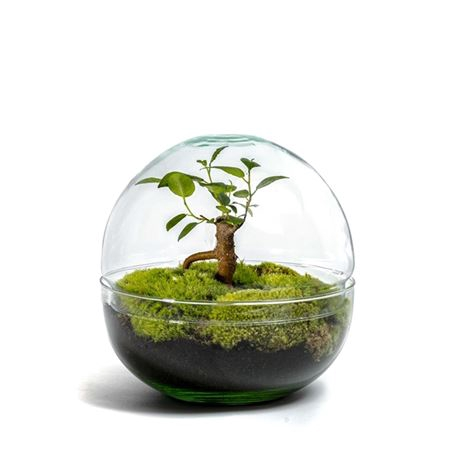 <h4>Gccr-2101 Growing Concepts Biodome M</h4>