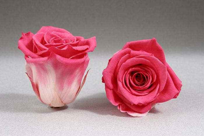 <h4>Rose stab. L Bic-10</h4>